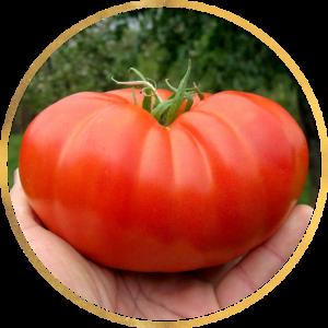 Красные, розовые томаты